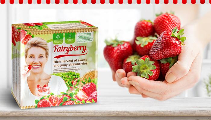 FairyBerry: neuveriteľná úroda veľkých a chutných jahôd o mesiac!